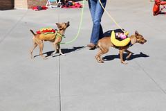 rogo&rana-5824 (angelsrescue) Tags: aau pets angels among us pet rescue alpharetta ga dog love
