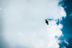 | LET's FLY | (mdanwarhossain) Tags: bird fly sky blue freedom clouds endless frozen cloud outdoor