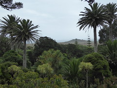 mild enough for palms (richie rocket) Tags: scillies seasearch scillyisles cornwall uk