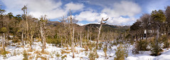 Panorama  Antillanca - Puyehue (Norpatagonia - Chile)[EXPLORE # 212 2016-10-25] (Noelegroj (More than 6 Million views.Thank you all) Tags: chile norpatagonia antillanca puyehue national park parquenacional winter invierno season trees arboles bosques forest deciduous lenga ires snow nieve snowy nevado field campo paisaje landscape clouds nubes cielo sky woodland panorama panoramica mountains montaas
