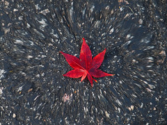 Red Leaf With A twirl (vernonkilby) Tags: red leaf twirl fall