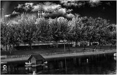 El lago en blanco y negro.( Talavera de la R.) (luissnchezmolina) Tags: espaa spain patos lake duck
