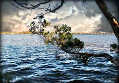 Eastward Facing (Chris C. Crowley- grieving and recovering) Tags: eastwardfacing amespark ormondbeachflorida halifaxriver scenic water tree cedar clouds sky buildings river ripples waves