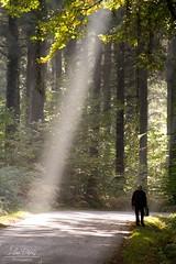 707 (lilou s photo) Tags: lumire light automne autumn canon eos 300mm bretagne rayon soleil sun