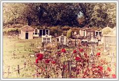 Fleurs rouges dans le cimetire (GilDays) Tags: france corsica corse cor2016 bastelica nikon nikond810 d810 cimetire cemetery fleur flower rouge red tombe tombeau grave tomb