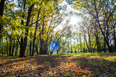 DSC_7455 (sergeysemendyaev) Tags: 2016 russia krasnodar autumn fall     landscape scenery    sunset dusk sun  trees