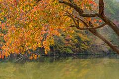 Dogwood at Dewey Lake (dngovoni) Tags: autumn deweylake dogwood fall jennywiley kentucky lake landscape water