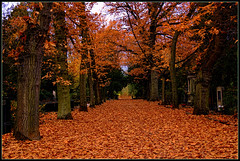Melaten cemetery in Cologne (scorpion (13)) Tags: melaten cemetery cologne sunday walk autumn colors creative leaves carpet trees gravestones photoart
