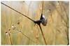 Alone / Sola (daril77) Tags: cengio montecengio cogollo veneto vicenza italia italy valdastico animals animali insetti insects altipiano asiago flowers fiori canon eos eos7d 7d