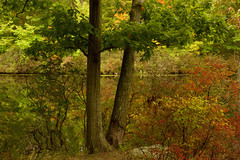 A Warm Glow at Lake Kanawauke (SunnyDazzled) Tags: fall autumn warm color trees leaves foliage bushes lake kanawauke harriman statepark newyork colorful landscape water reflection nature