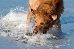 Water game (Flemming Andersen) Tags: animal outdoor seaside dogs hund nature sand water bedstedthy northdenmarkregion denmark dk