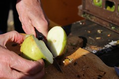 Cutting up an apple (Local Food Initiative) Tags: permaculture apple day apples press pressing cider group sustainable orchard cutting