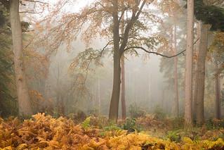 Bracknell Forest II