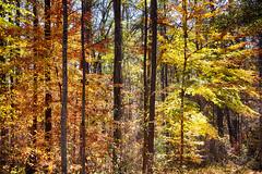 DSC08898-900_HDR (Capt Kodak) Tags: autumn chattahoocheerivernationalrecreationarea fall hdrefexpro2 madefrom3images medlockbridgepark nationalparkservice nikcollectionbygoogle niksoftware photomerge