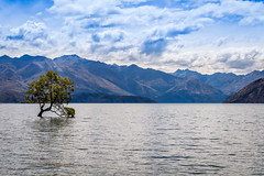The Lone Tree (quiltershaun) Tags: nz new zealand lake wanaka lone tree mountains landscape travel water nature nikon south island