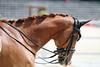 IMG_9237 (dreiwn) Tags: dressurprüfung dressurreiten dressurpferd ridingarena reitturnier reiten reitplatz reitverein reitsport ridingclub equestrian horse horseback horseriding horseshow pferdesport pferd pony pferde tamronsp70200f28divcusd dressur dressuur dressyr dressage