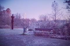 Cold bench ❄️ (Christian Passi - Steher82) Tags: cold frozen bencg bench fredenbaumpark bank park winter dezember contrast vsco tree baum frost kalt outdoor herbst