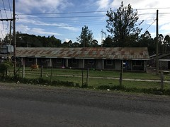 Houses of flower farm workers in Naivasha
