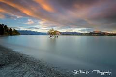 Sunset over lake Wanaka -New Zealand (Sandro Gambin) Tags: new zealand wanaka lake tree that mountain long exposure sky sunset clouds seascape landscape nature reflection silky water color coast beach