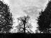 Threadbare (Cosmic3) Tags: black tree autumn bare skeletal