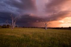 Storm at sunset at Woodville (ImaginingsLifeImages) Tags: newengland nsw rural storm sunset clouds weather australia northerntablelands armidaleregion farm armidale woodville places light