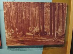 Mount Rainier National Park (Jasperdo) Tags: mountrainiernationalpark mountrainier nationalpark nationalparkservice nps washington pacificnorthwest ohanapecoshvisitorcenter visitorcenter museum mission66 civilianconservationcorps ccc newdeal