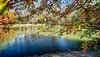 Town Creek park pond (hz536n/George Thomas) Tags: canon5d towncreek 2016 alabama auburn cs5 ef1740mmf4lusm fall nik copyright pond hdr water trees shade