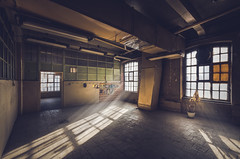 Old factory in d (Tomasz Aulich) Tags: factory old fabric windows light sunlight abandoned decay urbex explorer exploration urban city poland d nikon sigma building architecture travel lamp rust plant glass europe