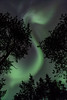 Finland (AntiAtlas) Tags: swirl light lights scandinavia winter snow northernlights stars trees lapland night finland green aurora auroraborealis
